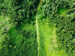 Нейросеть может различать породы деревьев по спутниковым снимкам